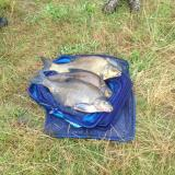 Robs Mersea Bream - Jul15.jpg